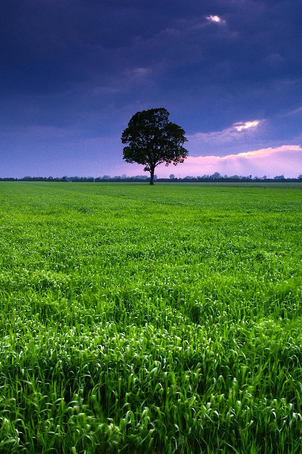 One Tree Photograph