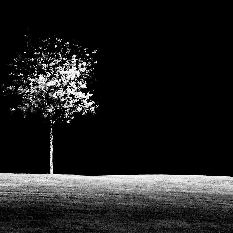 Tree Photograph - One Tree Hill by Darryl Dalton