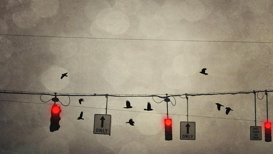 Street Light Photograph - One Way by Emily Stauring