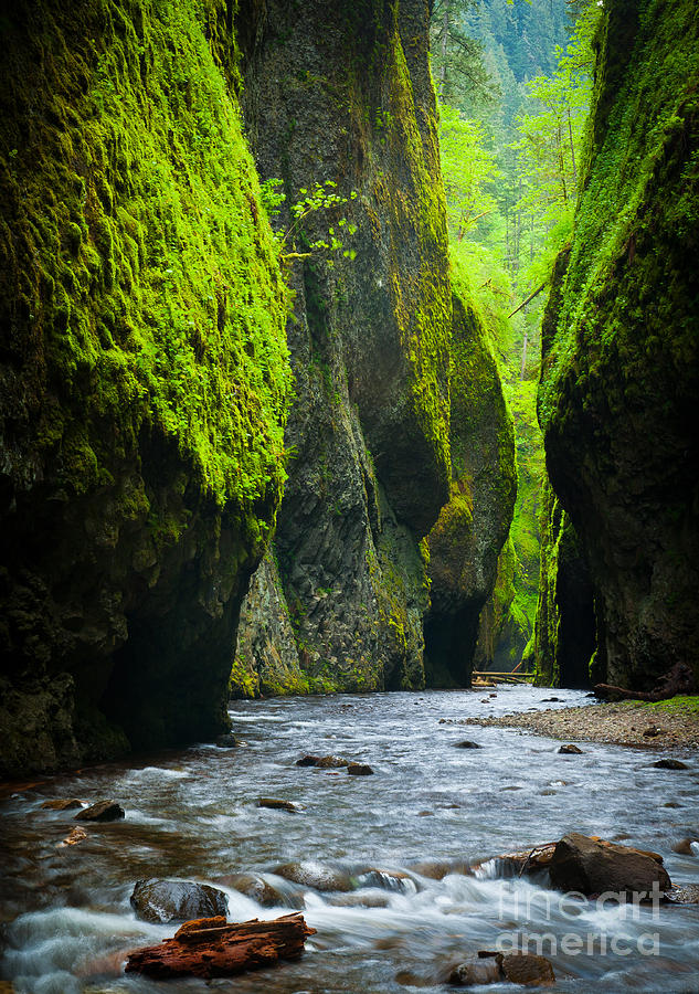 America Photograph - Oneonta River Gorge by Inge Johnsson