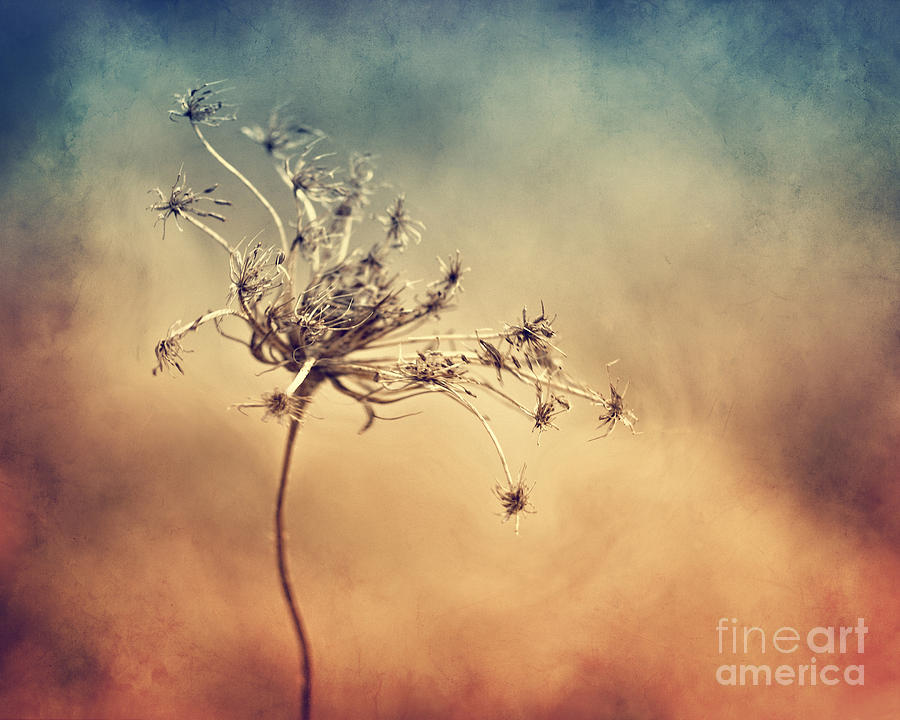 Plant Photograph - Only by Diana Kraleva