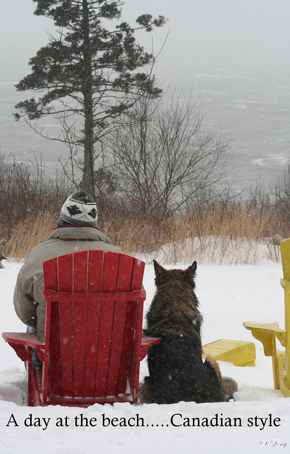 German Shepherd Photograph - Only In Canada by Sue Long