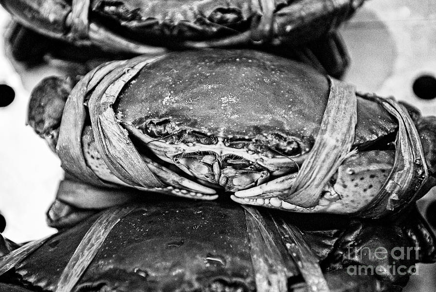 Crab Photograph - Ooh Crab - Black And White Version by Dean Harte