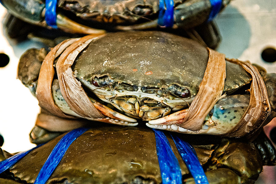 Crab Photograph - Ooh Crab by Dean Harte