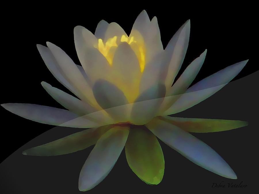 Flower Photograph - Opal Lotus Swish by Debra     Vatalaro