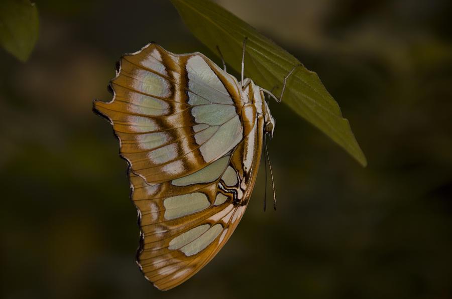 Opal Photograph - Opal by Penny Lisowski