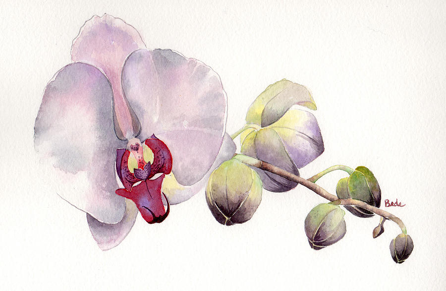 Orchid Painting - Open Up by Catherine Bede