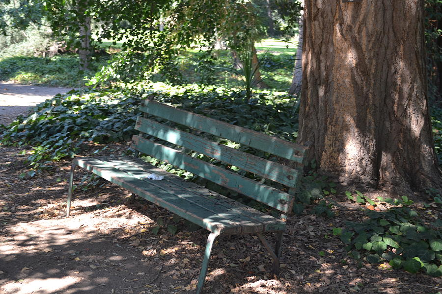 Bench Photograph - Open Welcome by Kiros Berhane
