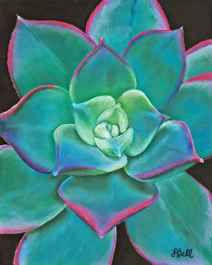 Succulent Drawing - Opulence by Laura Bell