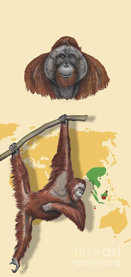 Orang-utan Orangutan Pongo Pygmaeus - Shrinking Habitat - Zoo Panel Great Apes - Schautafel Painting