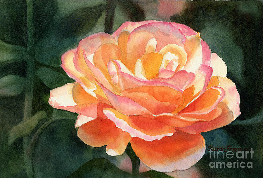 Orange And Gold Rose Painting By Sharon Freeman