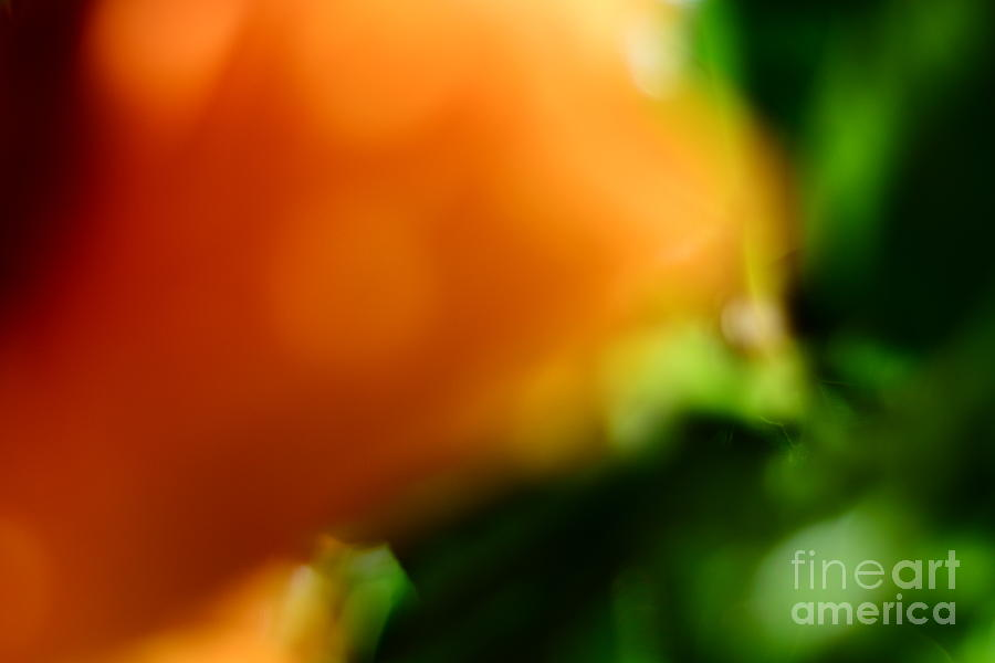 Art  Digital Art - Orange And Green  by Bobby Mandal