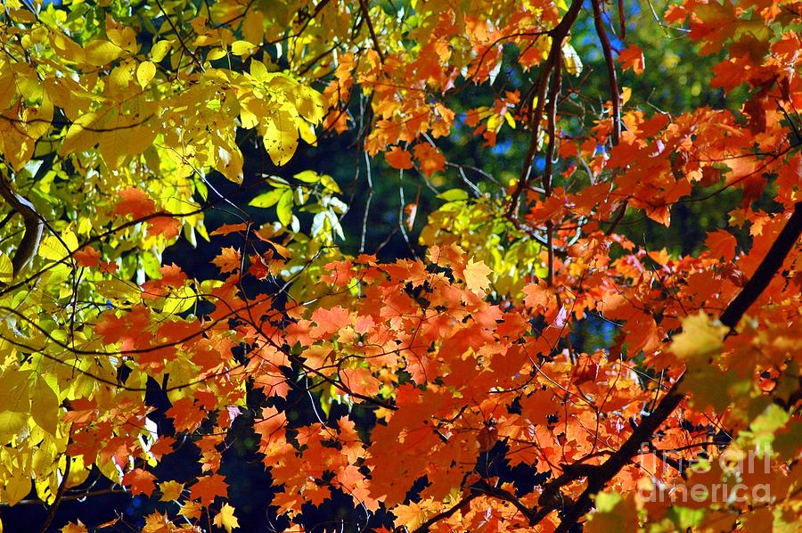 Scenic Photograph - Orange And Yellow by Kathleen Struckle