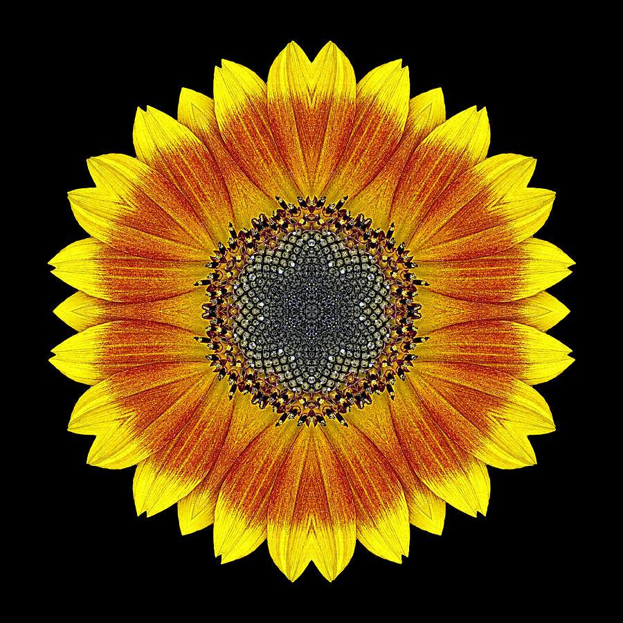Flower Photograph - Orange And Yellow Sunflower Flower Mandala by David J Bookbinder