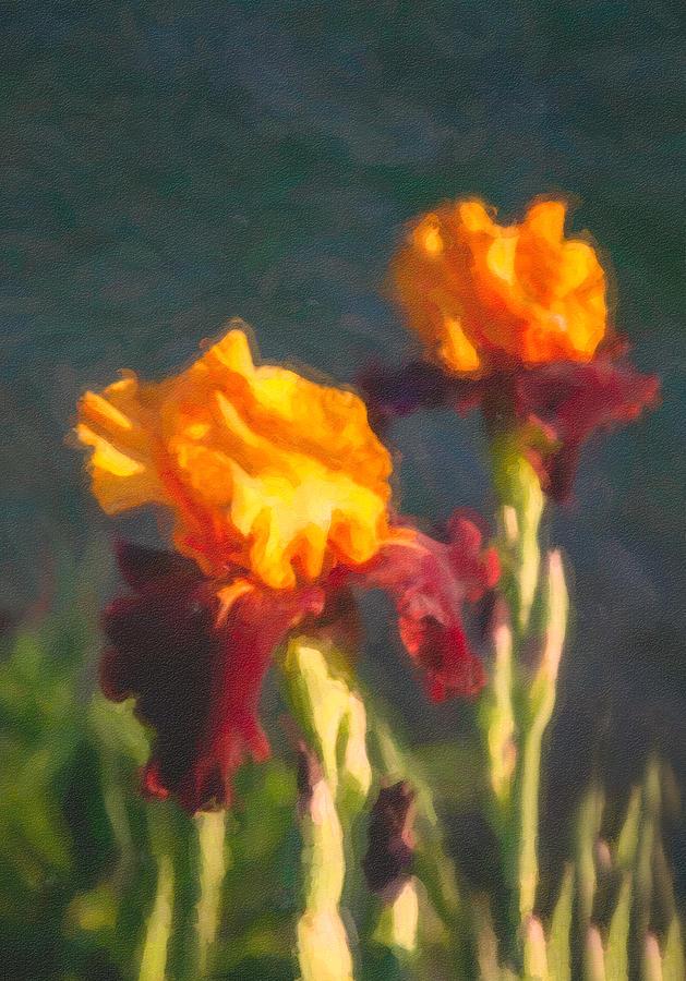 North Cascades Painting - Orange Bearded Irises by Omaste Witkowski