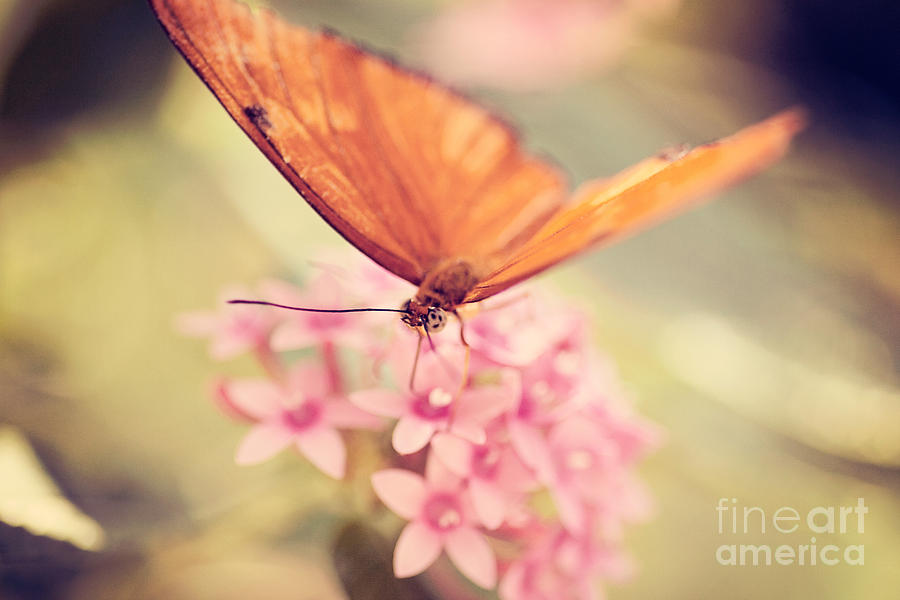 Nature Photograph - Orange Butterfly by Erin Johnson
