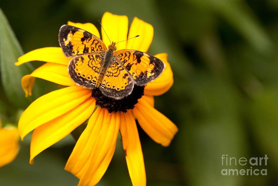 Orange Photograph - Orange Butterfly by Lena Auxier