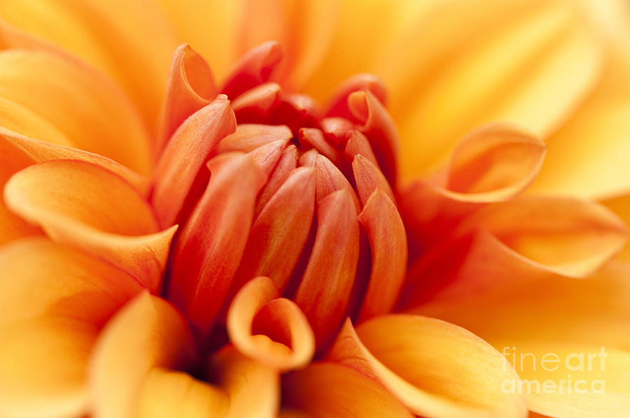 Abstract Photograph - Orange Centre by Anne Gilbert