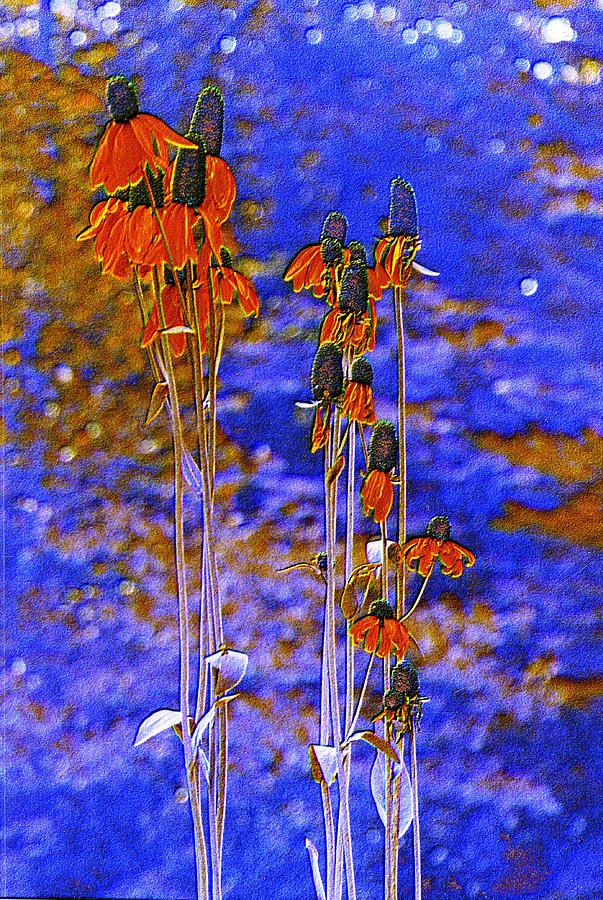 Fantasy Photograph - Orange Cones by Jan Amiss Photography