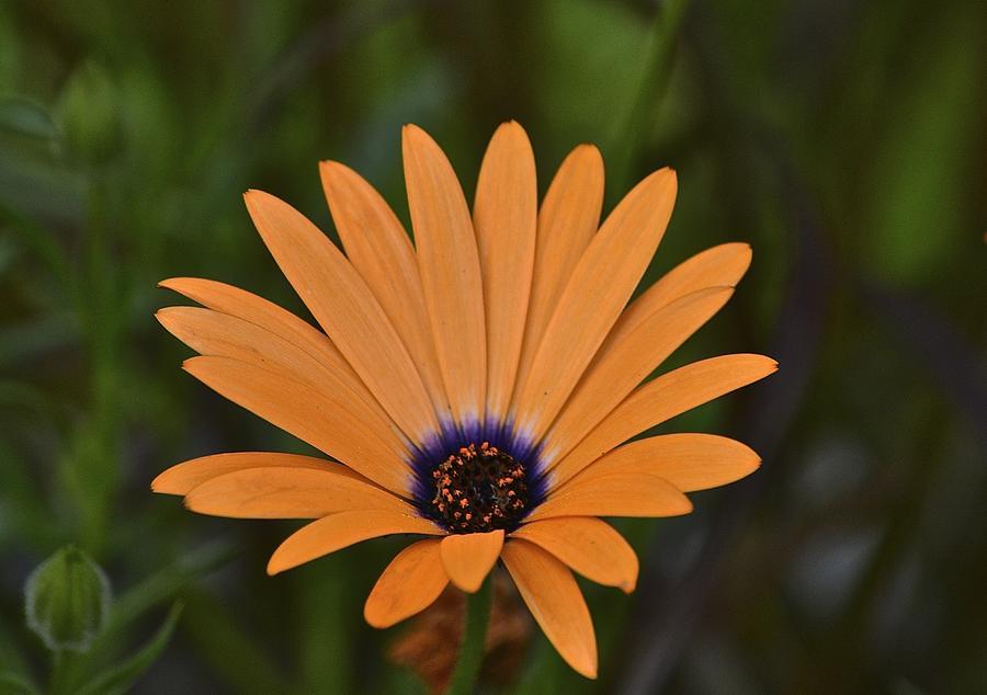 Flower Photograph - Orange Cream by Marjorie Tietjen