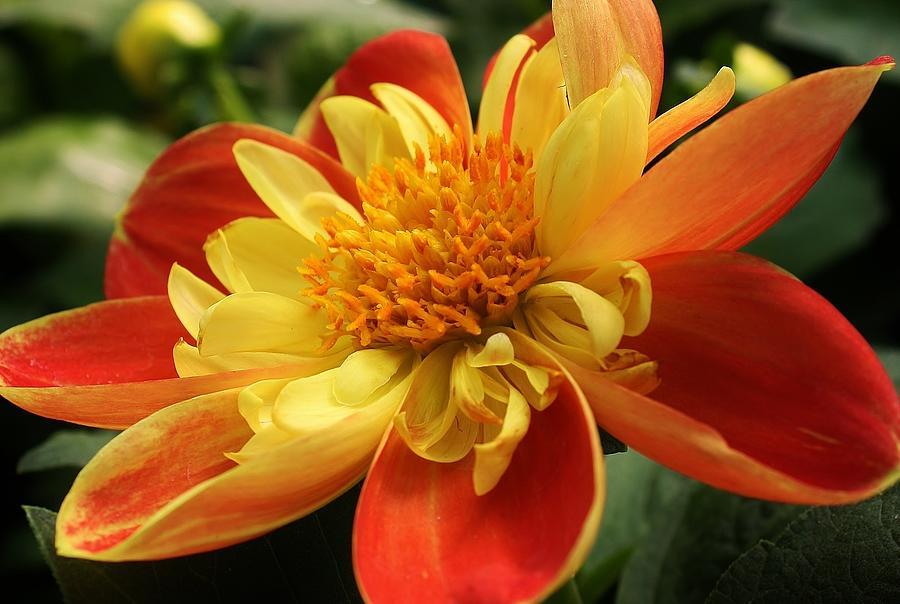 Flora Photograph - Orange Crush by Bruce Bley