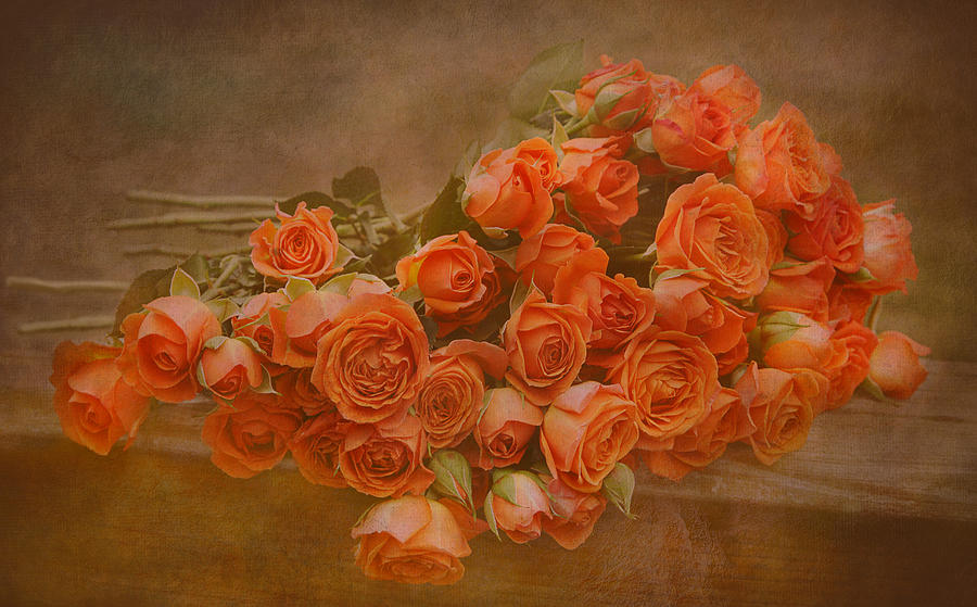 Roses Photograph - Orange Crush by Pat Abbott