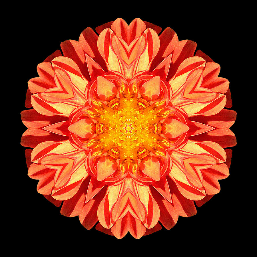 Flower Photograph - Orange Dahlia Flower Mandala by David J Bookbinder