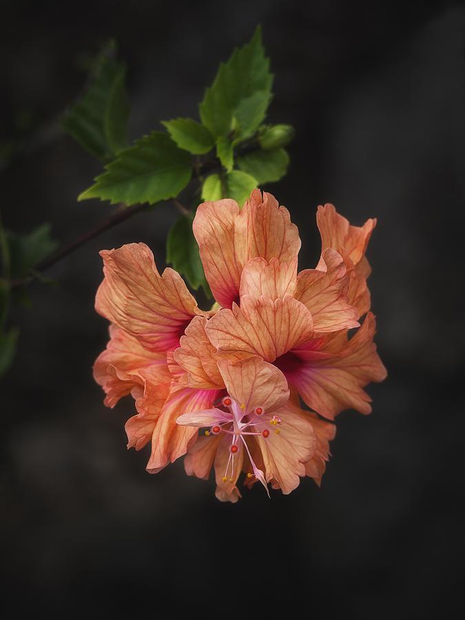 Orange Delight by Kim Andelkovic