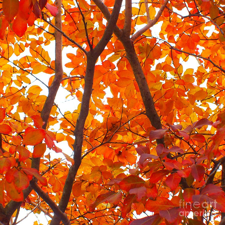Autumn Leaves Photograph - Orange Fall Color by Scott Cameron