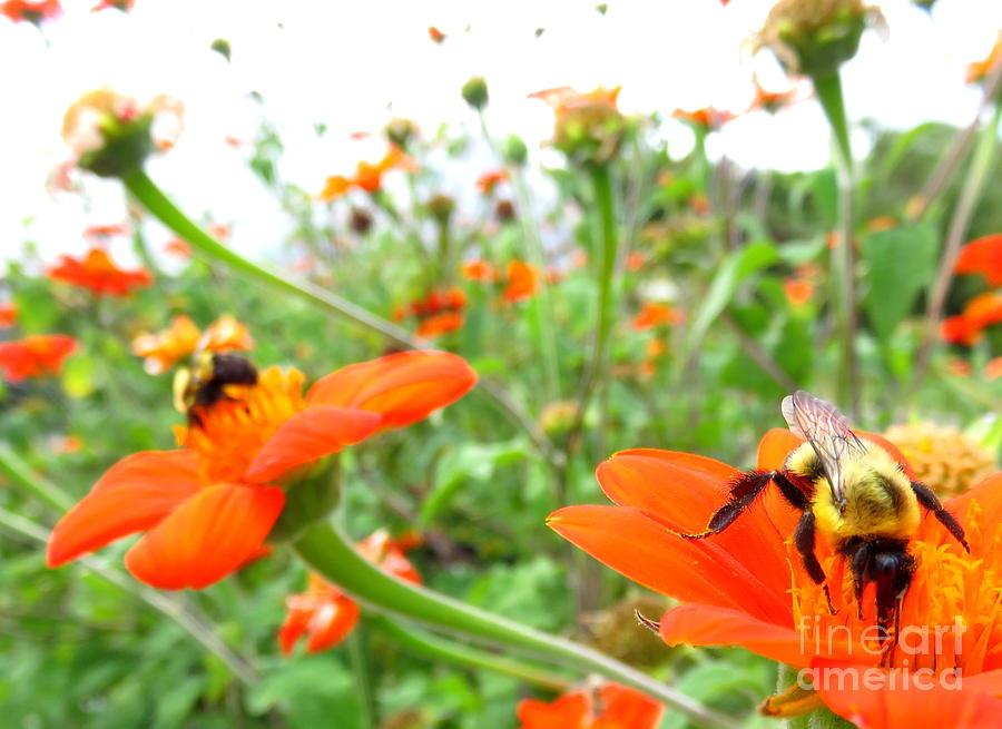 Orange Flowers Photograph - Orange Field by Maria Scarfone
