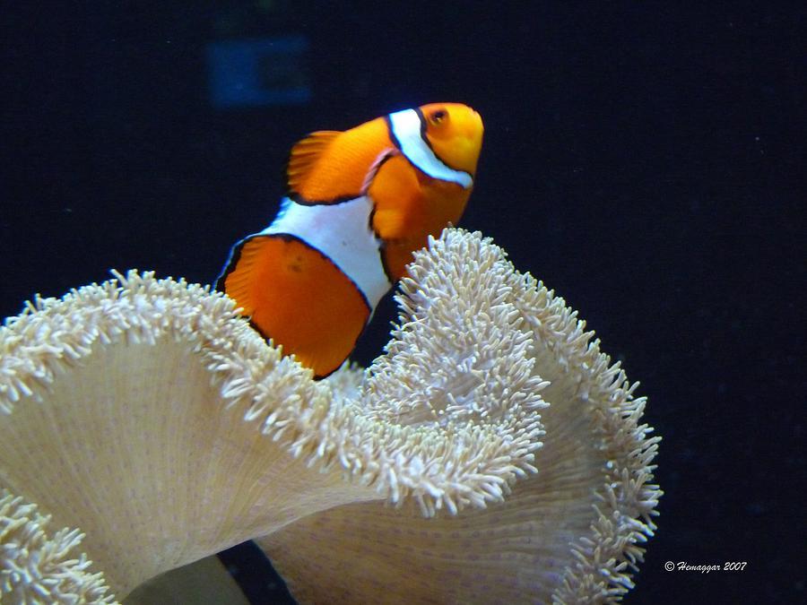 Fish Photograph - Orange Fish And Sea Creature by Hemu Aggarwal