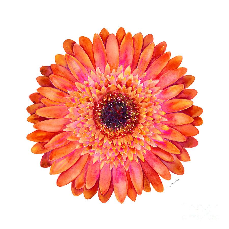 Orange gerbera daisy painting by amy kirkpatrick pink painting orange gerbera daisy by amy kirkpatrick izmirmasajfo