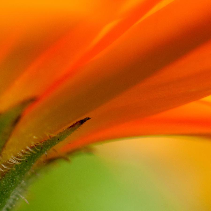Orange Photograph - Orange by Illusorium Illustration