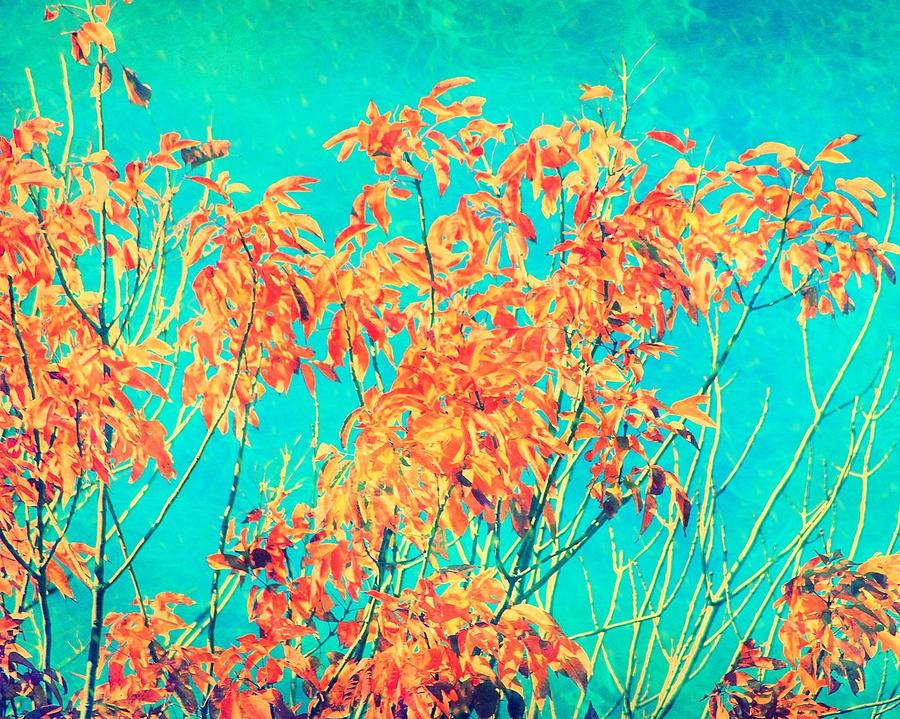 Orange Leaves And Turquoise Sky Photograph by Elizabeth Budd