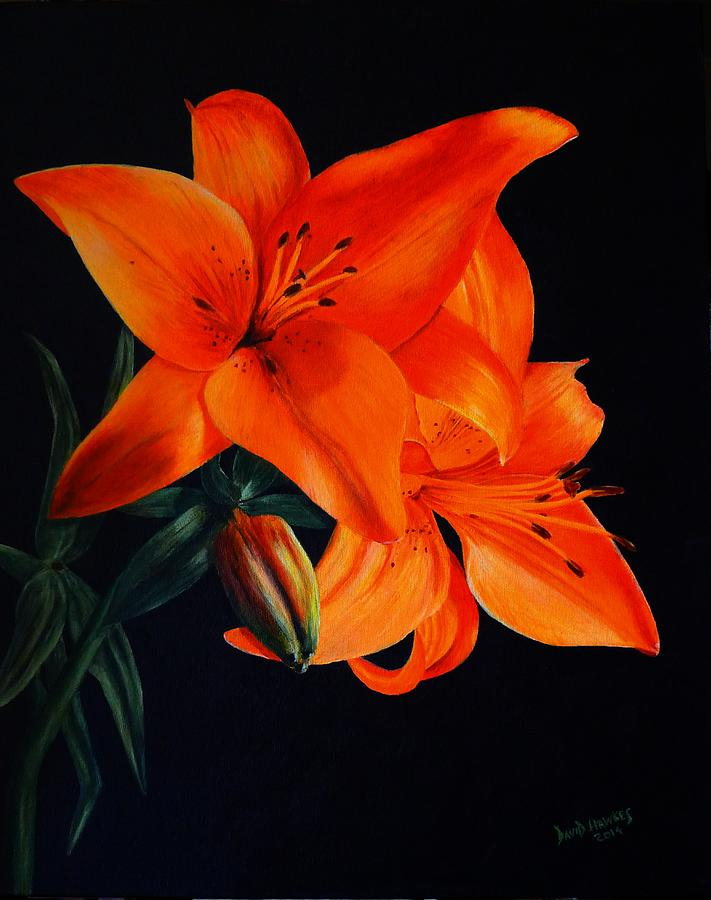 Lilly Painting - Orange Lilly by David Hawkes