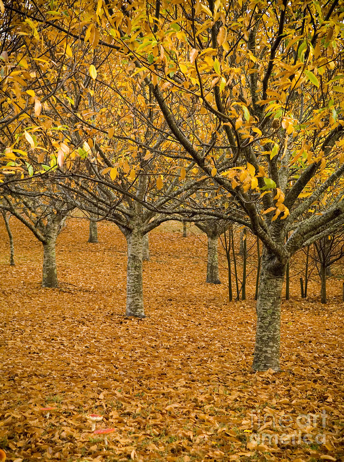 Abstract Photograph - Orange Orchard by Tim Hester