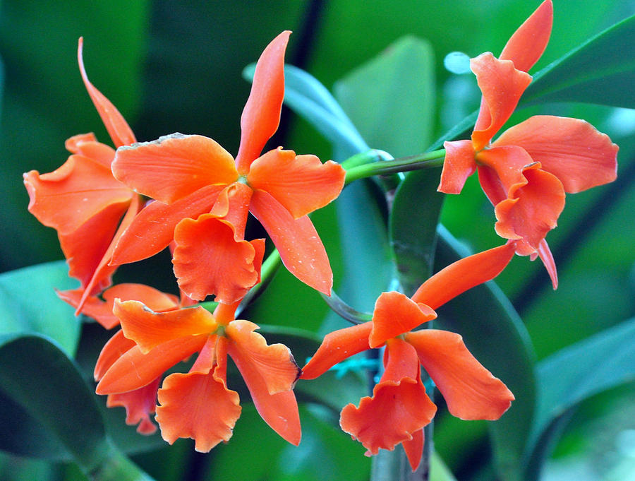 Plant Painting - Orange Perfection by Gail Butler