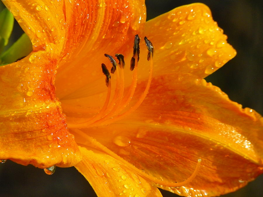 Orange Photograph - Orange Rain by Karen Wiles