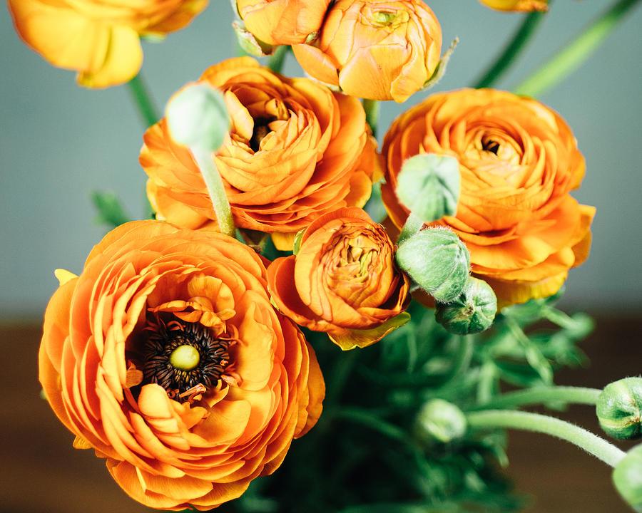 Flower Photograph - Orange ranunculus bouquet by Nastasia Cook
