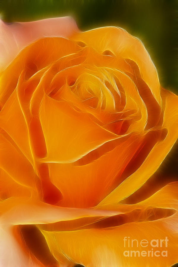 Flower Photograph - Orange Rose 6291-fractal by Gary Gingrich Galleries
