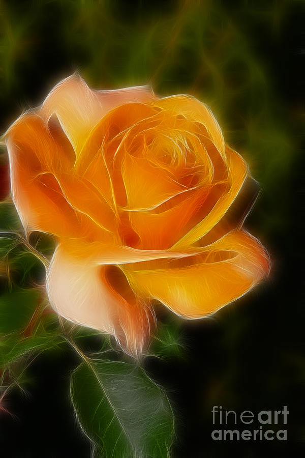 Flower Photograph - Orange Rose 6292-fractal by Gary Gingrich Galleries