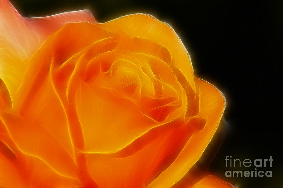 Flower Photograph - Orange Rose 6308 by Gary Gingrich Galleries
