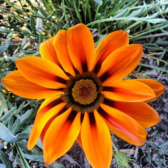 Orange Flower Plant Tree Photograph - Orange by Saifon Anaya