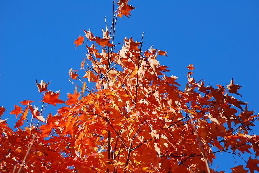Fall Photograph - Orange Sky by Lorena Mahoney