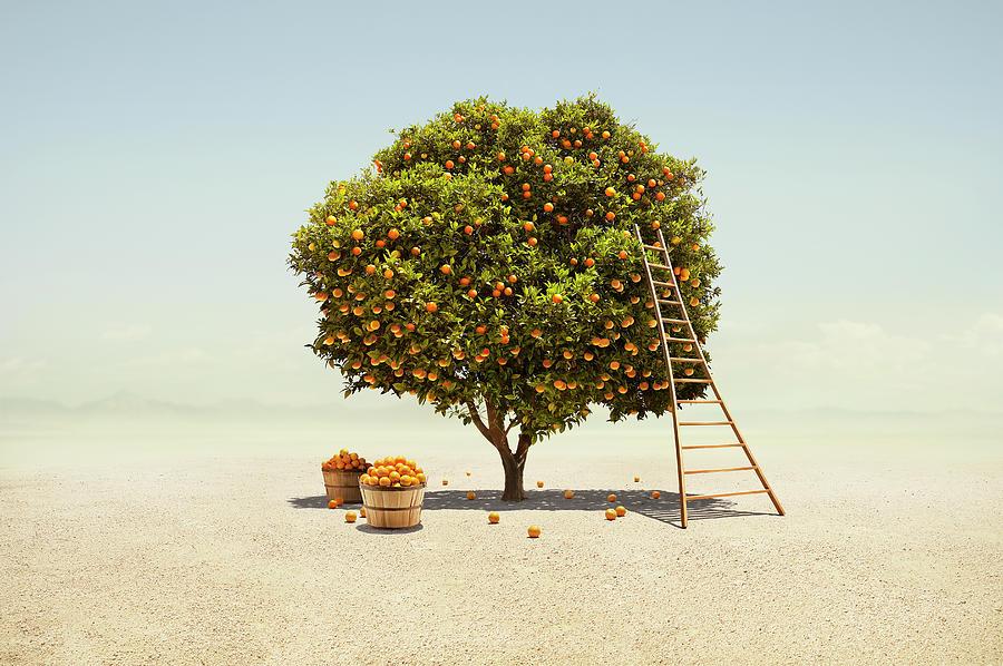 Orange Tree Harvest In Barren Desert Photograph by Stephen Swintek