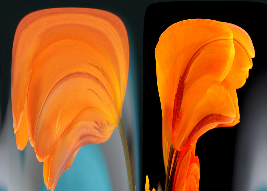 Orange Tulip Fellows by Jim Baker