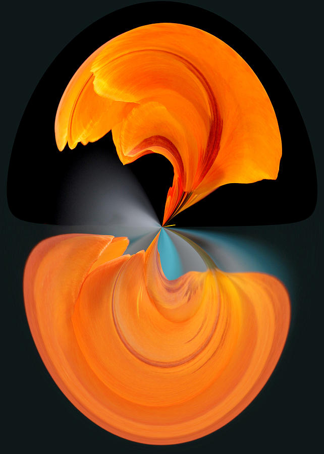 Orange Tulip Hour Glass by Jim Baker
