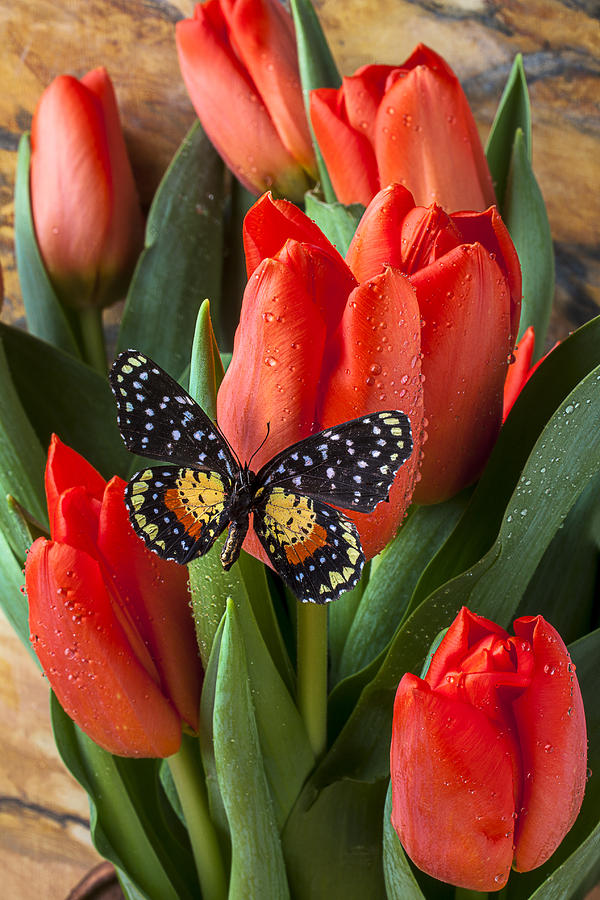 Orange Tulips Photograph - Orange Tulips And Butterfly by Garry Gay
