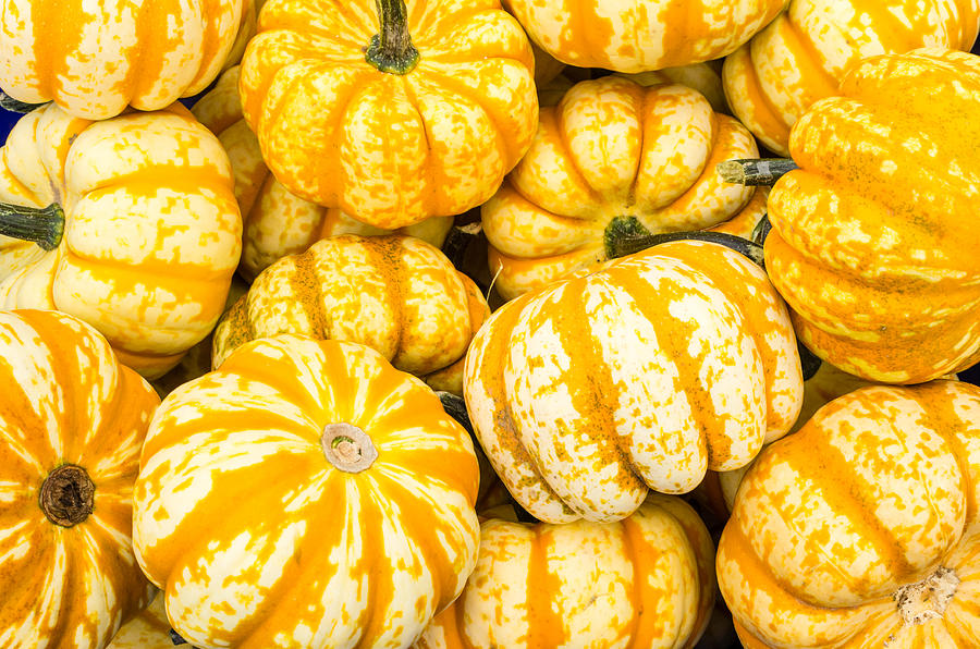 Agriculture Photograph - Orange Winter Squash On Display by John Trax