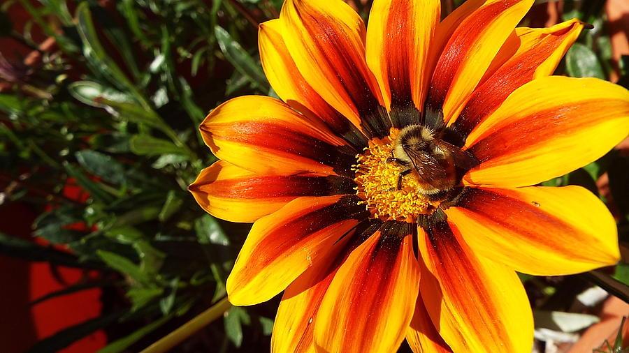 Orange yellow flower photograph by cheryl king flowers photograph orange yellow flower by cheryl king mightylinksfo